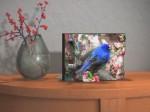 bird_display