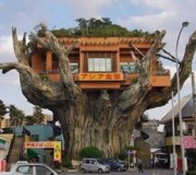 tree-house-image