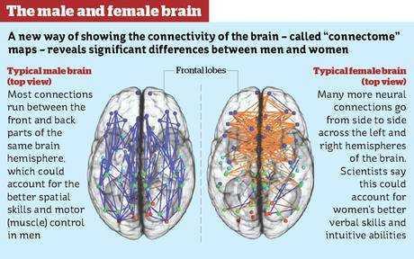 half-brain image