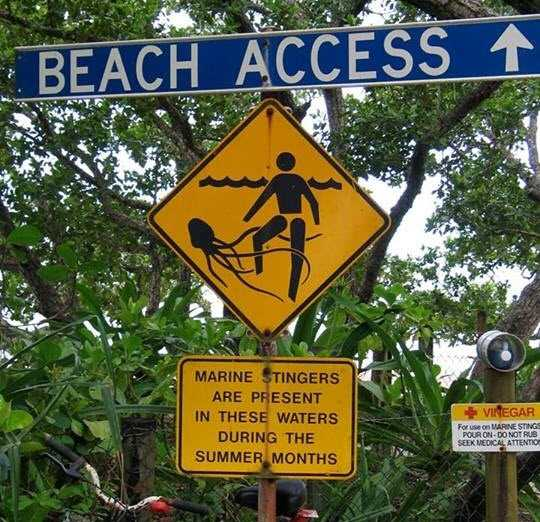 Welcome to the beach!