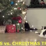 Cats versus Christmas Trees (video)