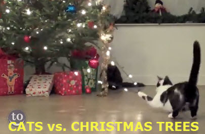 cats vs xmas trees