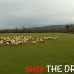Who Needs a Sheepdog – Watch this drone herding sheep (video)