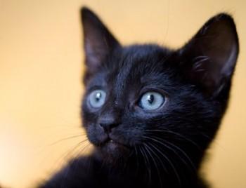 black_kittens