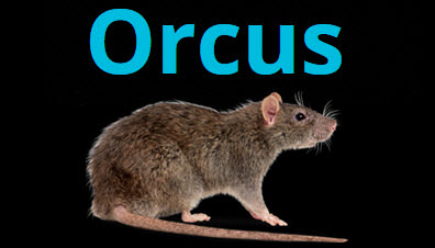 orcus-rat-feature-image